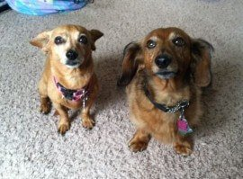 Our clients' dogs Oscar and Gracie