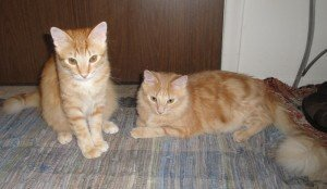 Our clients' cats Chloe and Rosie