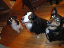 Our clients' dogs Peanut, Sky and Luna