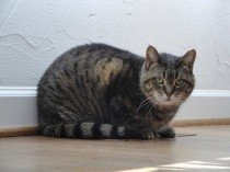 Our clients' cat Daisy