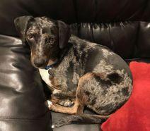 Quinn - Featured Pet for September 2018